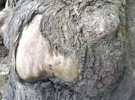 Bum-Tree