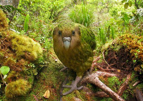 The-Worlds-Rarest-Birds-2-001