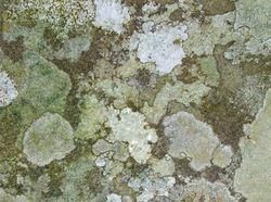 Walgae01