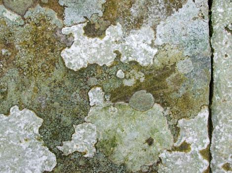 Walgae04