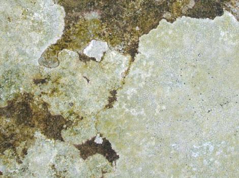 Walgae03