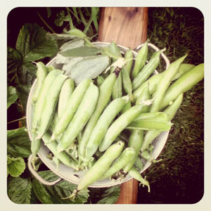 Peas-and-Beans